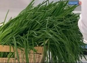 Почему некоторым нельзя есть зеленый лук?
