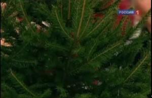 Польза и вред натуральной елки