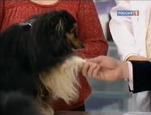 Что о хозяине «расскажет» его собака?