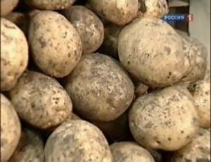 Как готовить картошку, чтобы не набрать вес?
