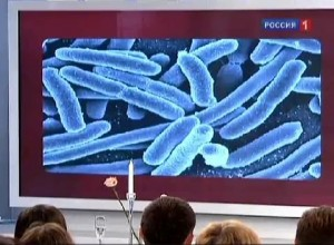 Что за бактерия атакует Европу?