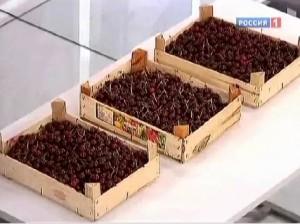 Какую пользу могут принести вишневые косточки?