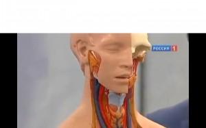 Как распознать рак щитовидной железы