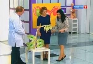 Боровая матка в гинекологии лечебные свойства для женщин инструкция