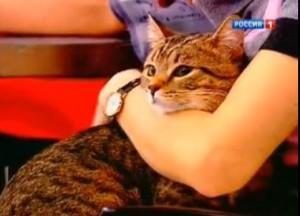 Помогают ли кошки снизить давление