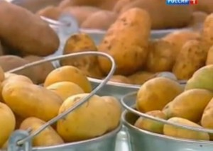 Какой картофель полезней