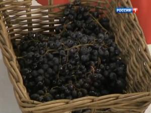 Какой виноград лучше