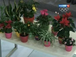 Растения, которые могут вас защитить от простуды