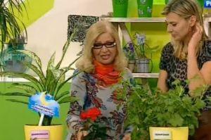 Какие комнатные растения полезны