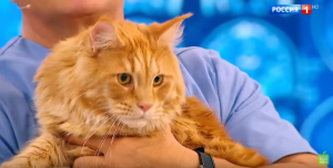 Кошка в доме: польза и вред фото