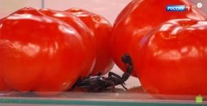 Свежие помидоры: польза и вред для организма фото